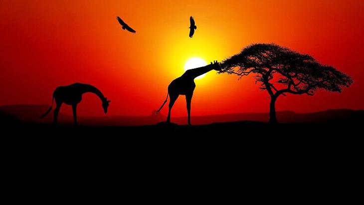 Les animaux en Afrique du Sud