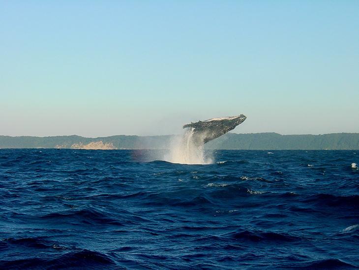 Les baleines en Afrique du Sud