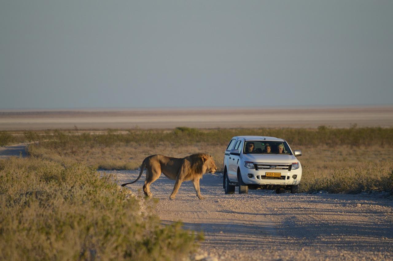 Differents types de voyages en Afrique Du Sud