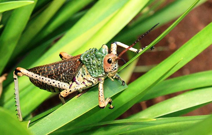 Les insectes en Afrique du Sud